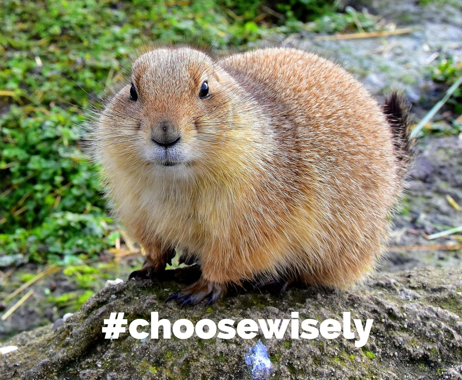 Choose Wisely Groundhog